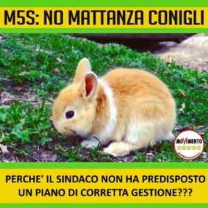 mattanza conigli 2